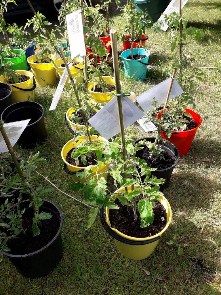 Taking the idea of a community garden to the people