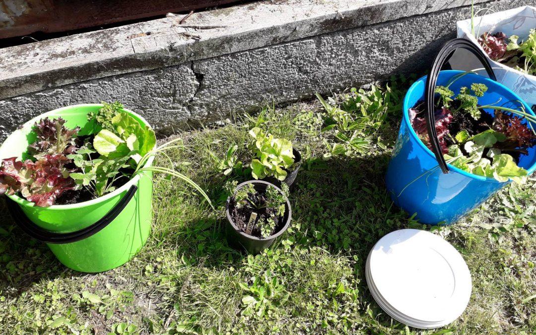 Community Gardens – Take 2