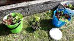 Community Gardens - Take 2